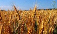 السودان يتوقع إستلام 48 ألف طن من معونة القمح الأميركية
