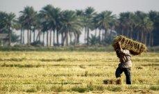 وزير التموين المصري: الاحتياطي الاستراتيجي من القمح يكفي 5.5 شهر
