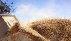 مورد حبوب روسي يمد الجزائر بنحو 60 ألف طن من القمح
